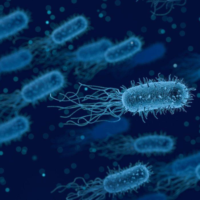 Le microbiote avec Patrick Martini du laboratoire Mint-e
