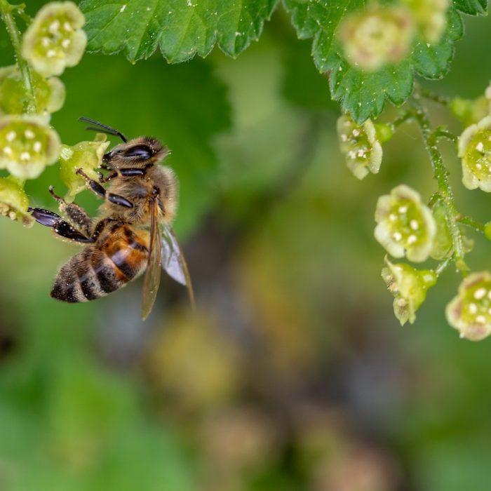 Le pollen: pourquoi il ne faut plus s'en passer.