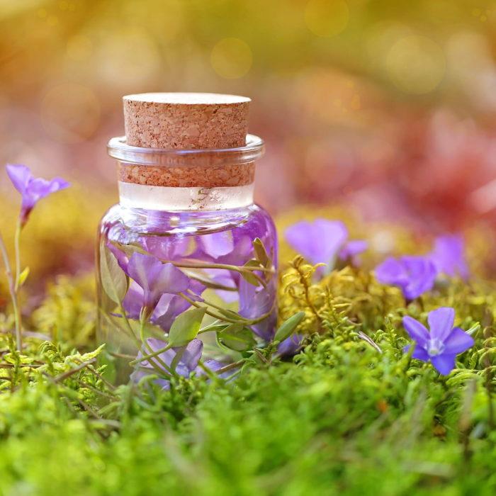 Elixirs floraux : Comment l'énergie des fleurs agit-elle sur nous ?